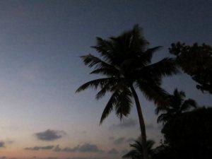 Сафари Ari Atoll